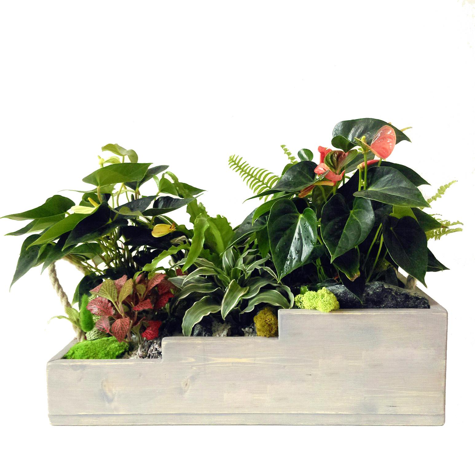 Кашпо с растениями ISIPO MEYA<br>