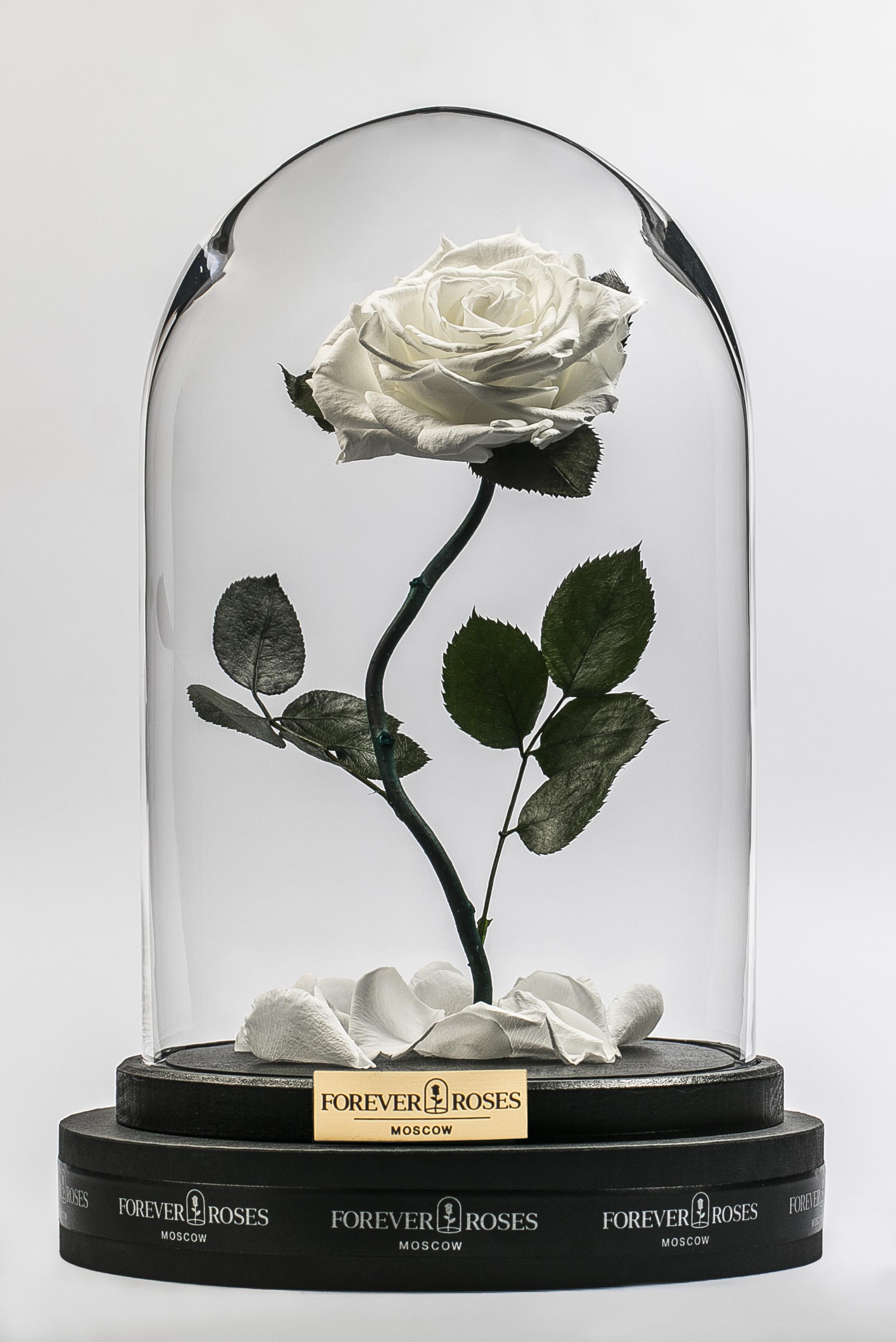 Роза на изогнутом стебле White Pearl<br>