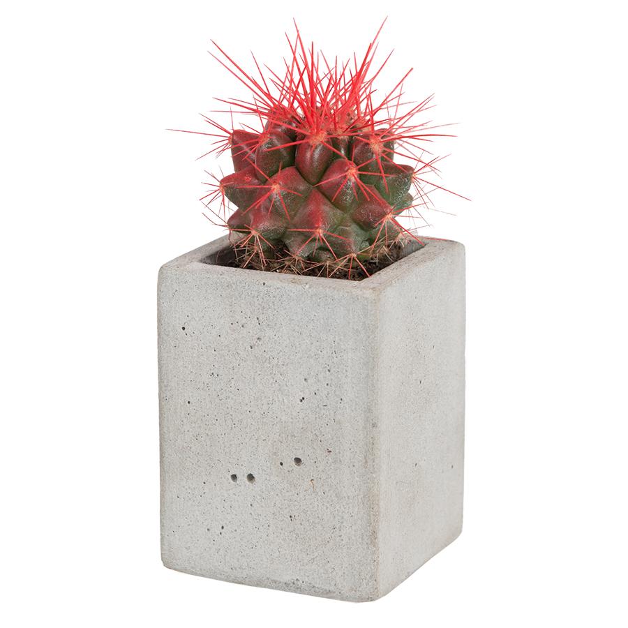 Кашпо - магнит с кактусом ICEY MAGNETO<br>
