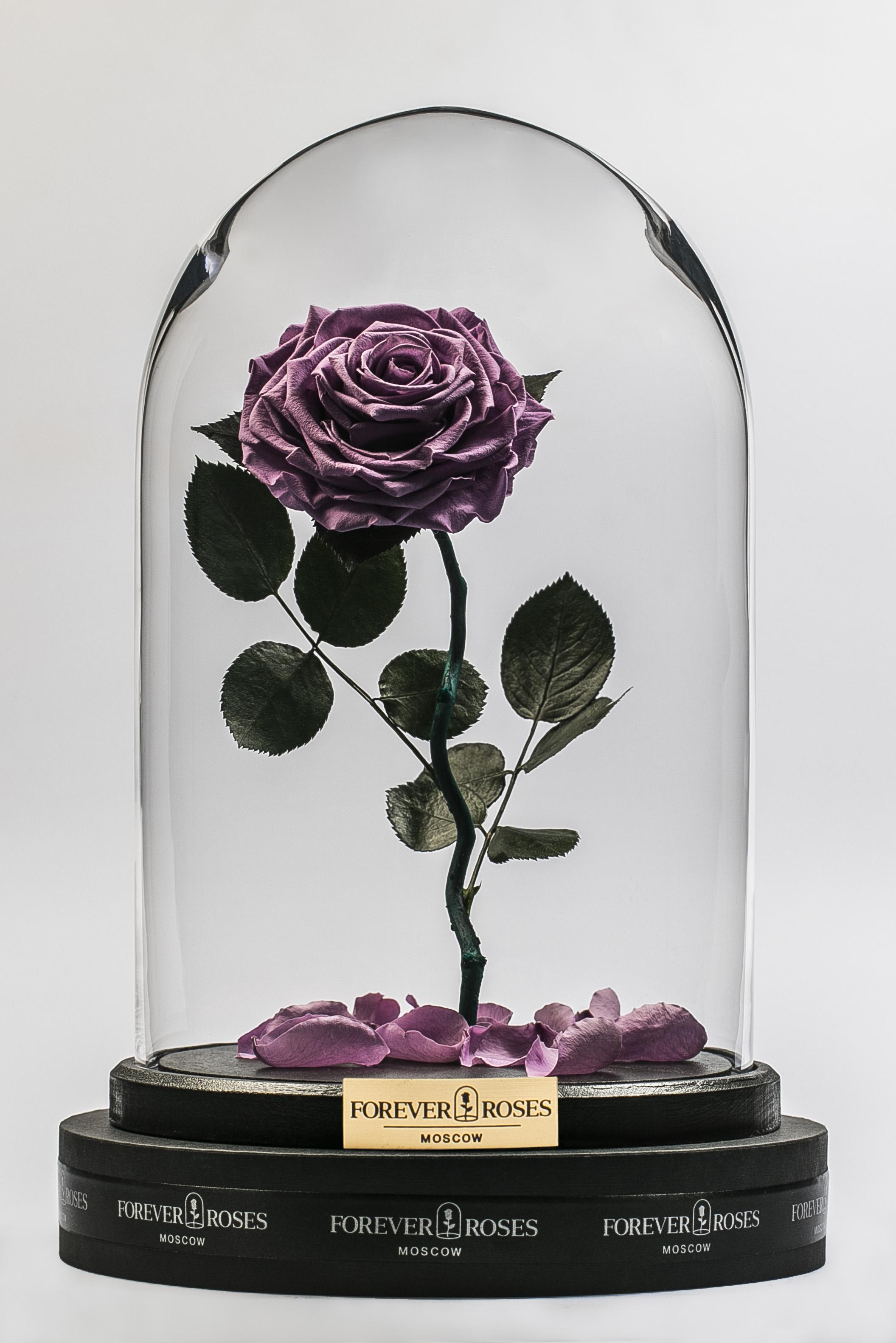 Роза на изогнутом стебле Lilac<br>
