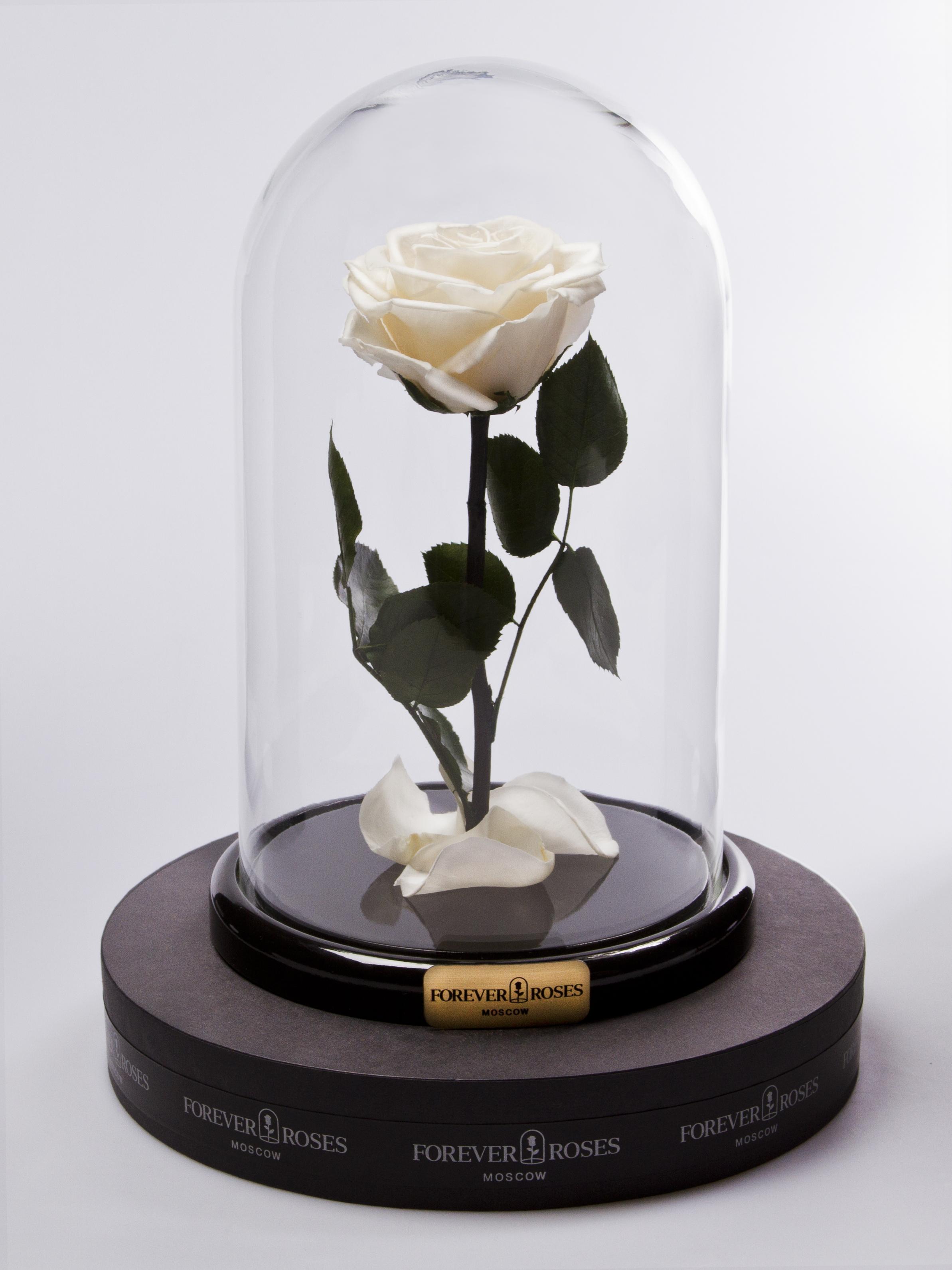 Роза мини Shampan<br>