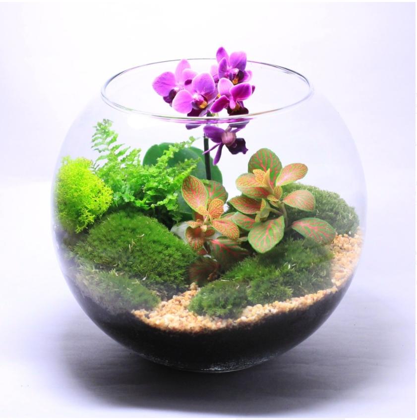 Сад орхидей<br>