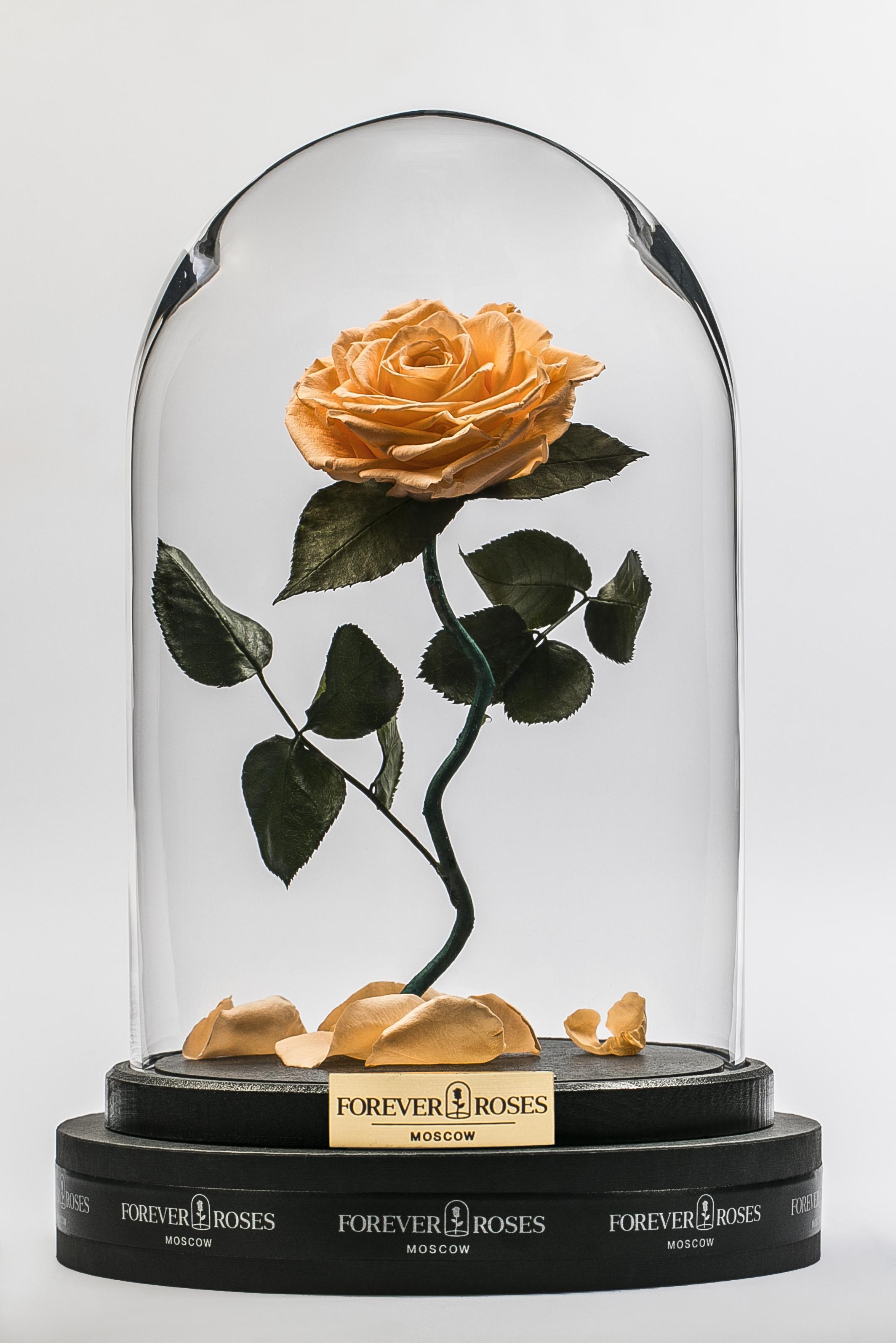 Роза на изогнутом стебле Peache<br>
