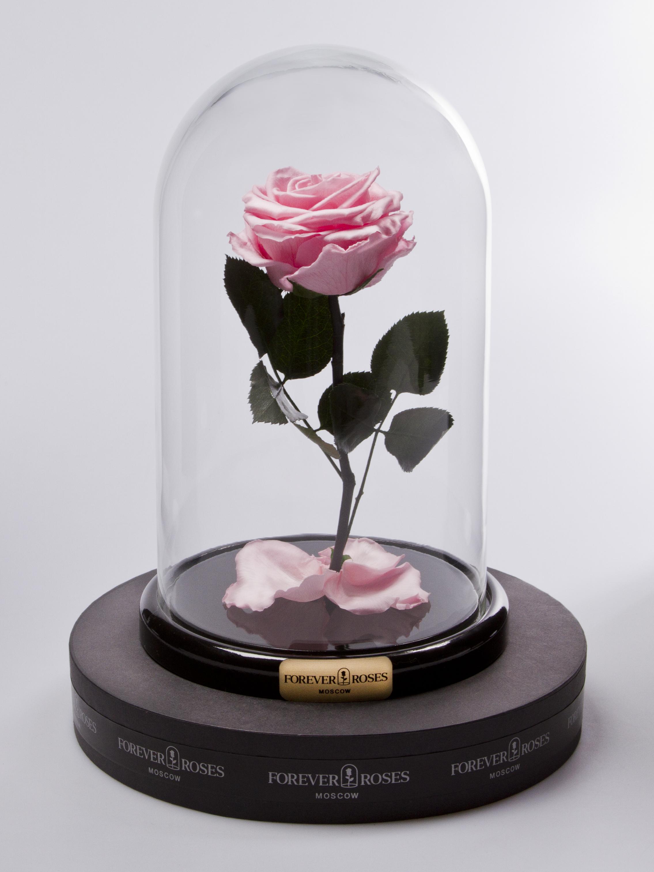 Роза мини Pretty Pink<br>
