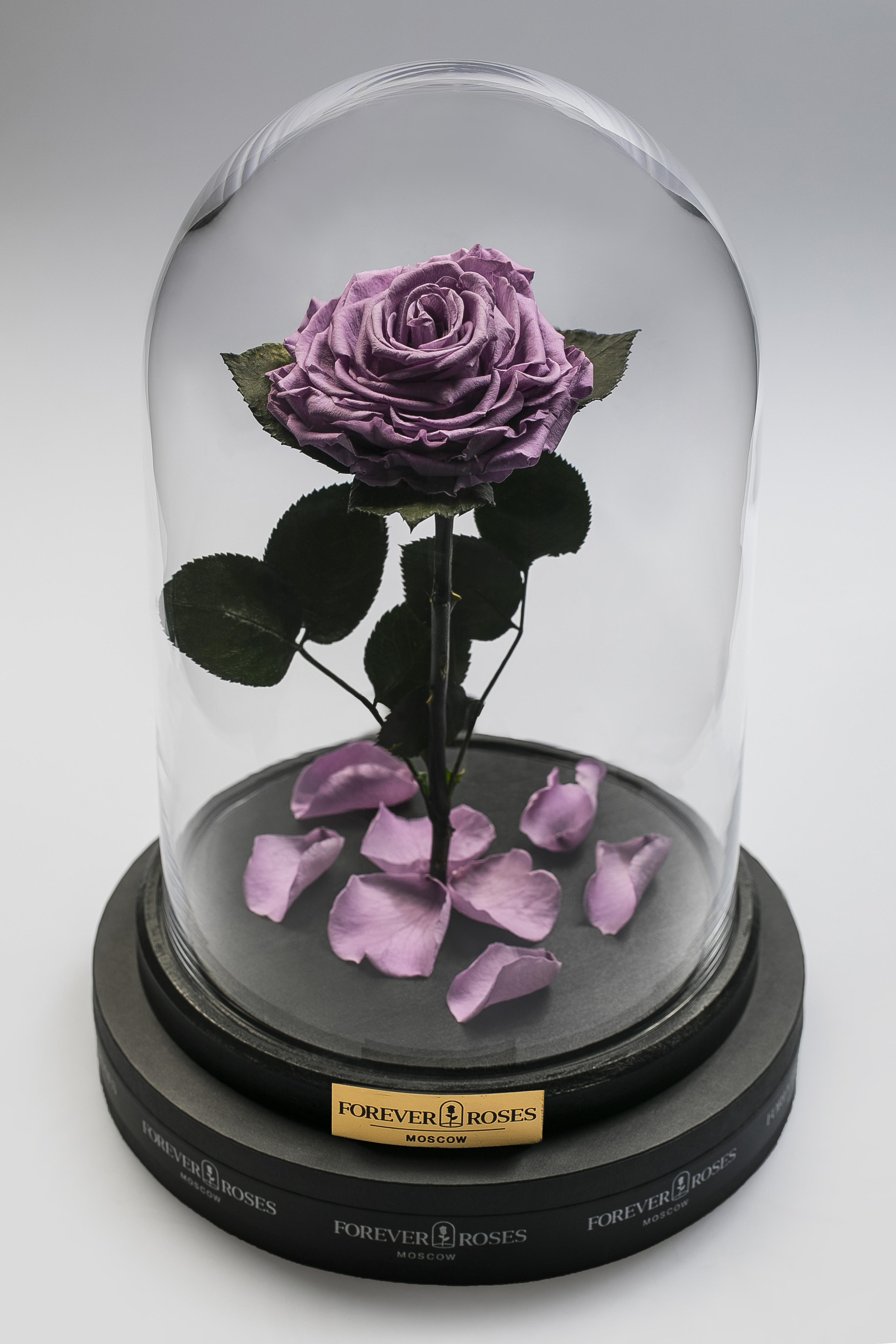 Роза на прямом стебле Lilac<br>