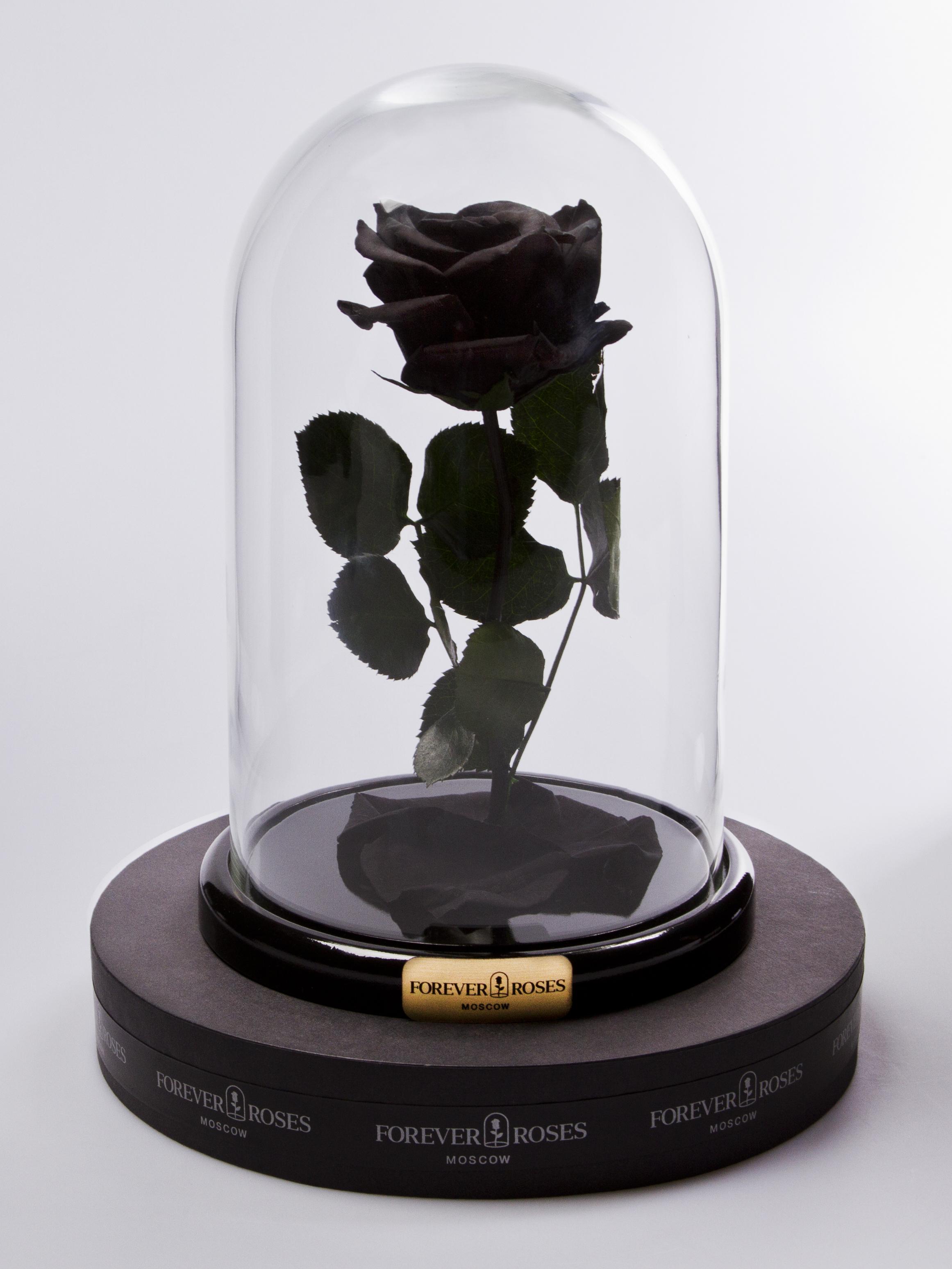 Роза мини Noir<br>
