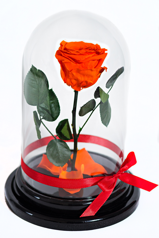Оранжевый соблазн<br>
