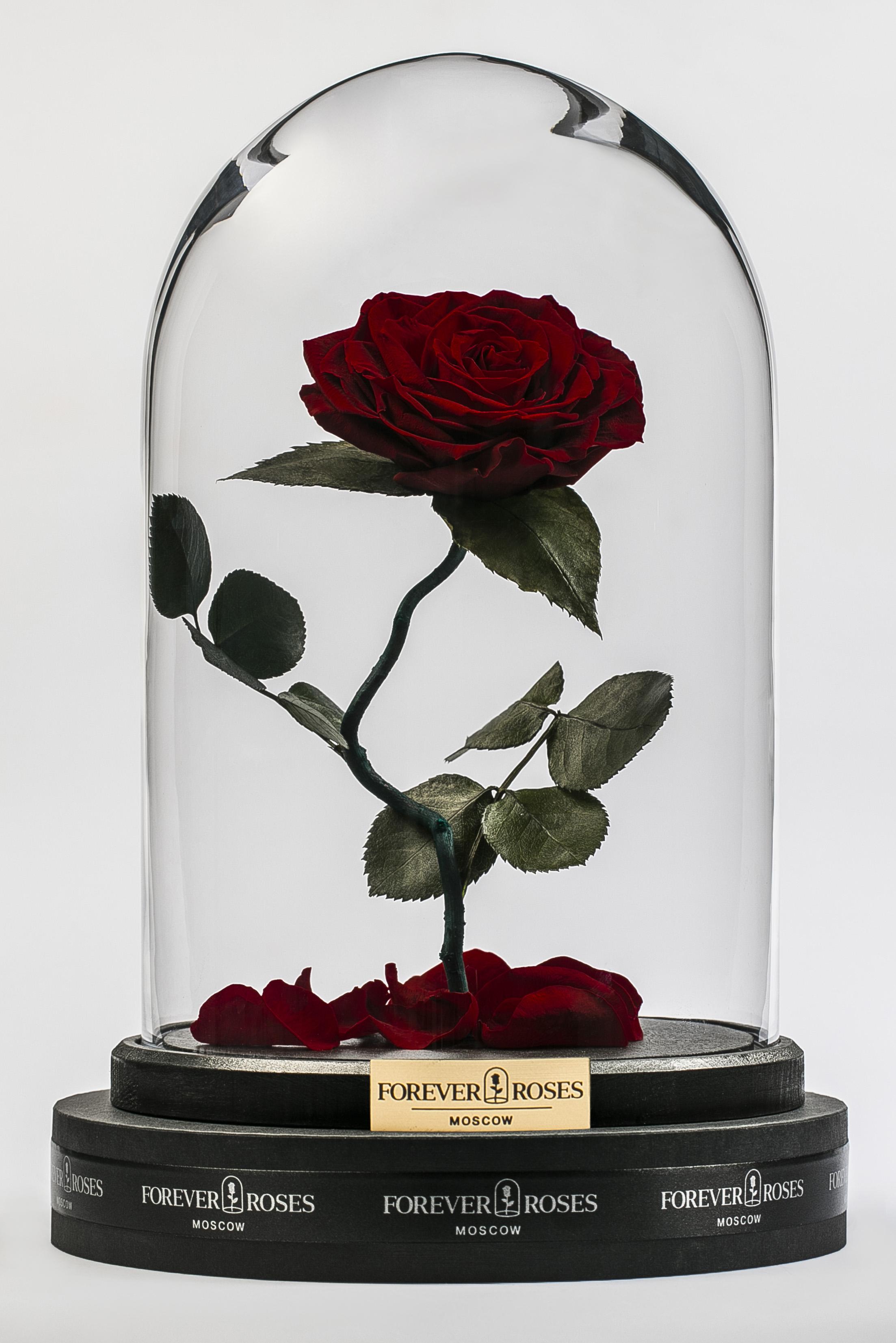 Роза на изогнутом стебле Maroon<br>