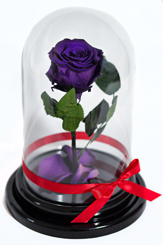 Фиолетовая гармония<br>
