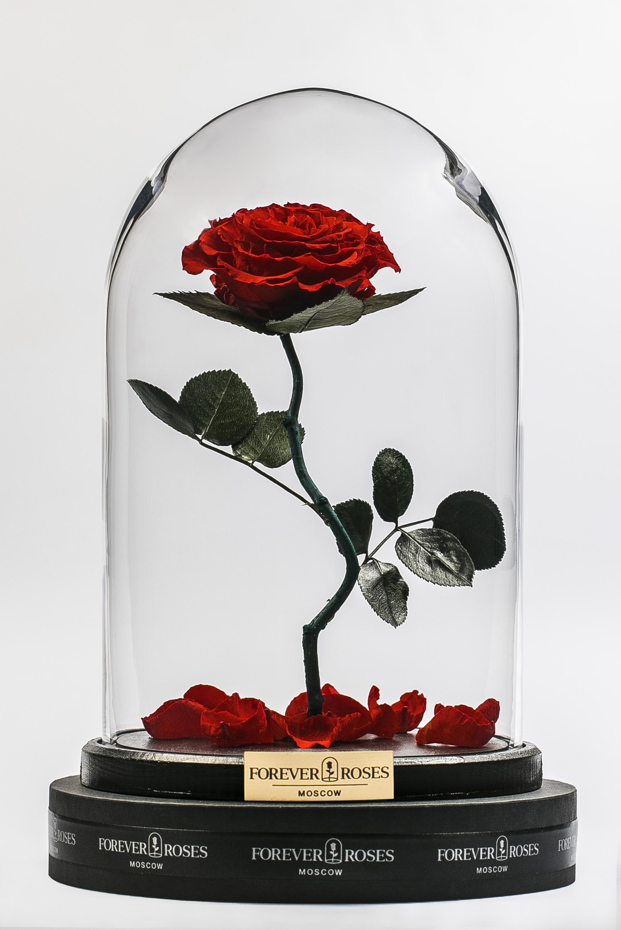 Роза на изогнутом стебле Romantic Red<br>