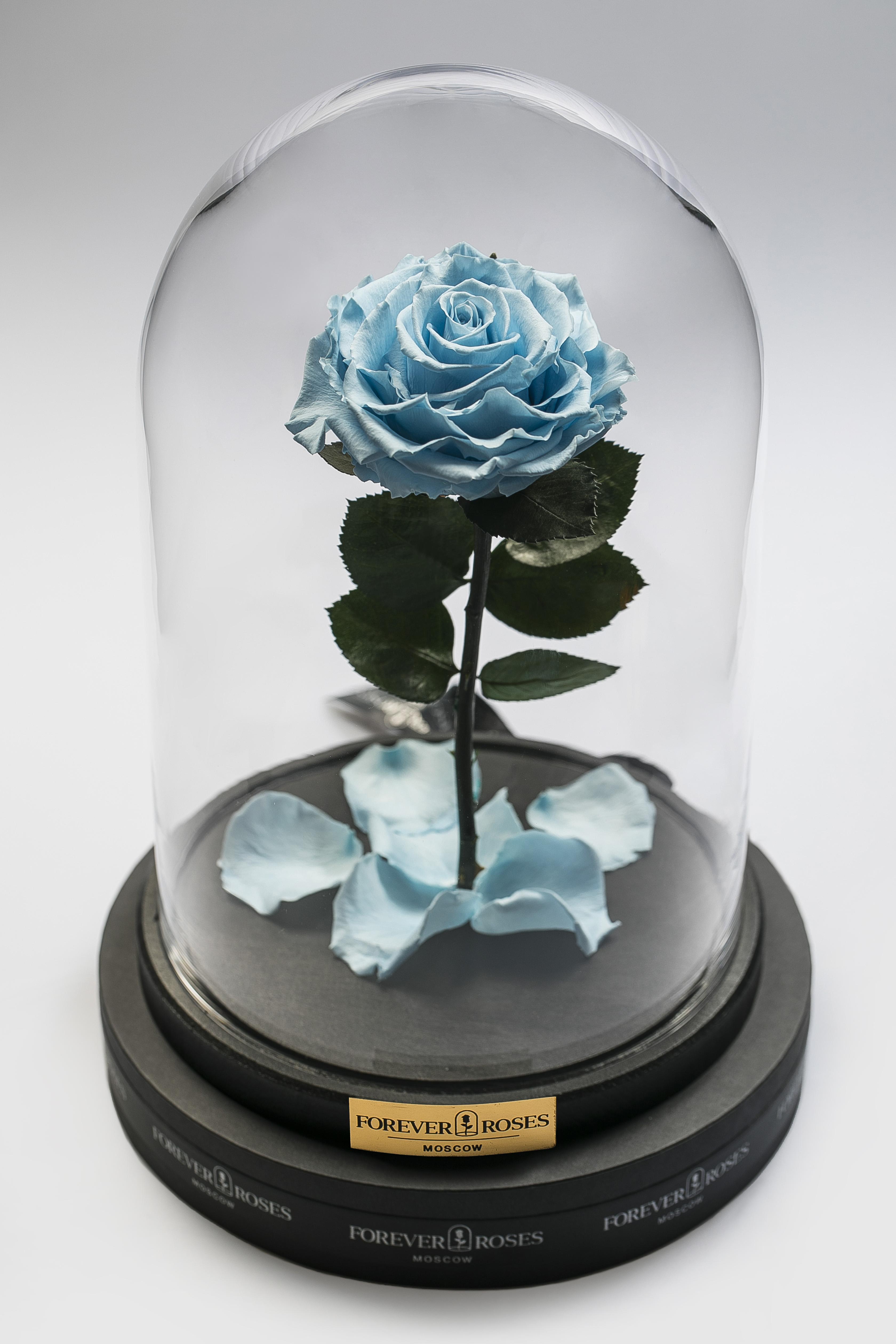 Роза на прямом стебле Baby Blue<br>